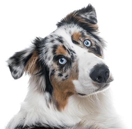 Tsjechisch voer voor honden en katten 100% zonder chemicaliën