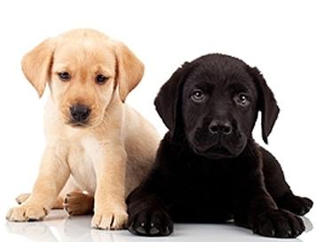 Koudgeperste korrels voor puppy's
