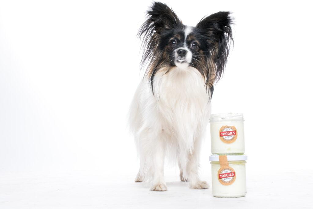 Yoghurt voor honden en katten Yoggies