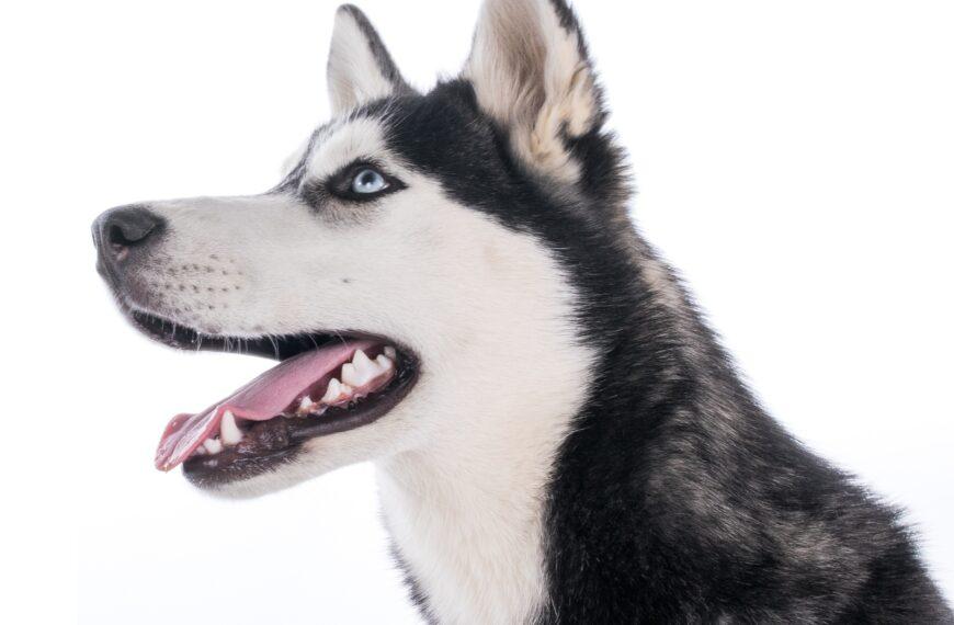 Když psa bolí zuby