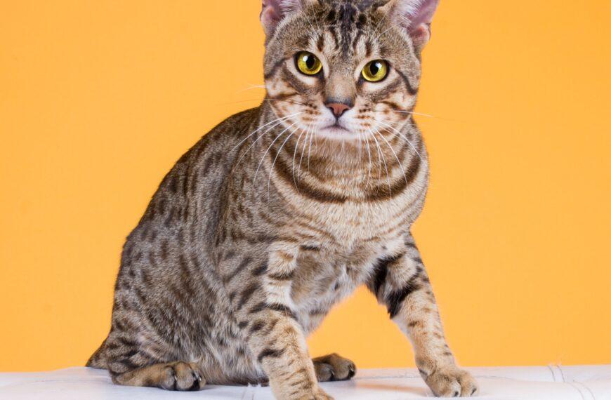Největší kočičí strašáci – nemoci FIV, FeLV aFIP